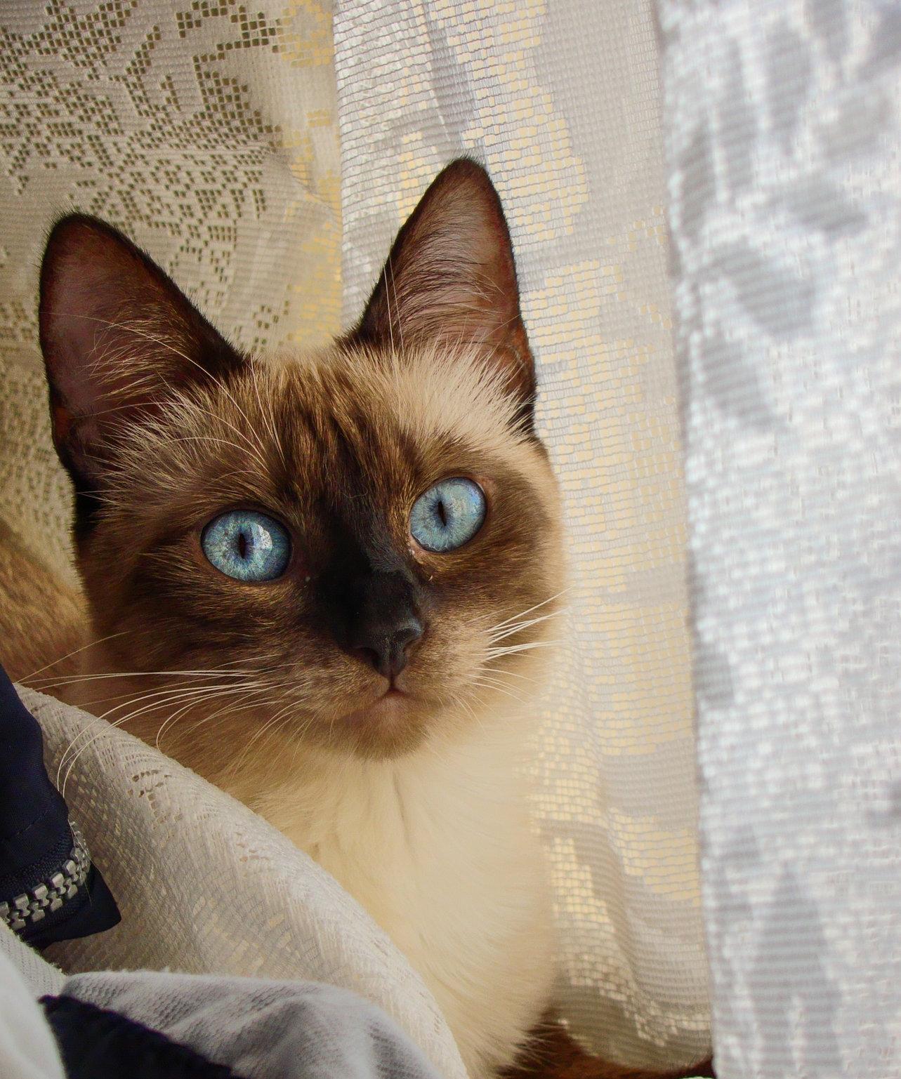 Ce putem invata de la…pisici?